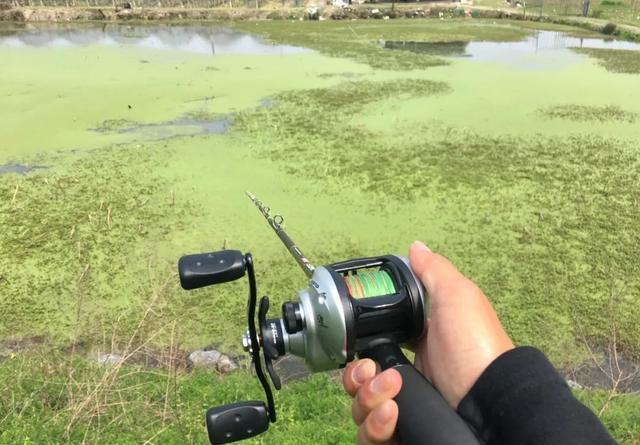 春季如何路亚黑鱼?解读钓黑鱼之标点与钓法的选择