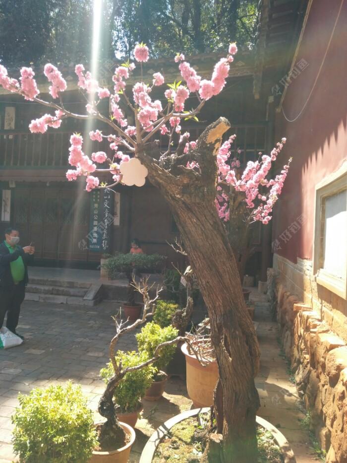粉色的桃花