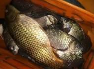 山林溪河冬钓,野钓鱼漂中鱼教学,钓获一箱鱼