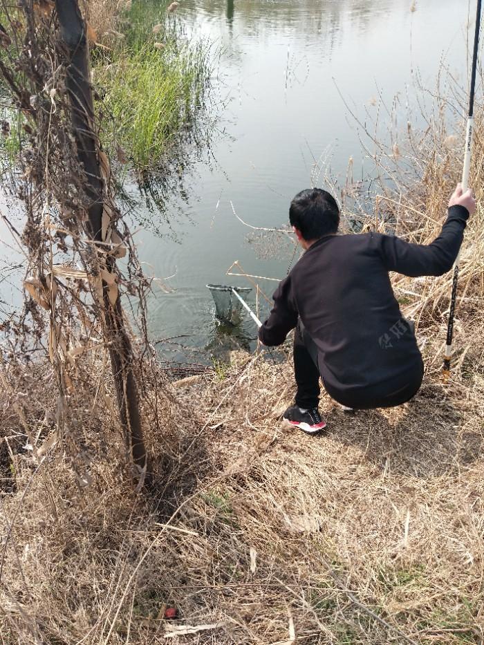 小伙子留鱼的同时,由于抄网离的比较远。又不敢把杆子放下。我过去把抄网给到他手里,他连声说谢谢!马上抄鱼,鱼入护。谁叫天下钓鱼是一家呢!