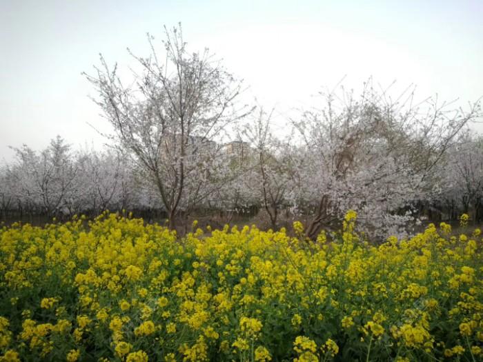 忽如一夜春风来,千树万树梨花开!😂️借用诗句