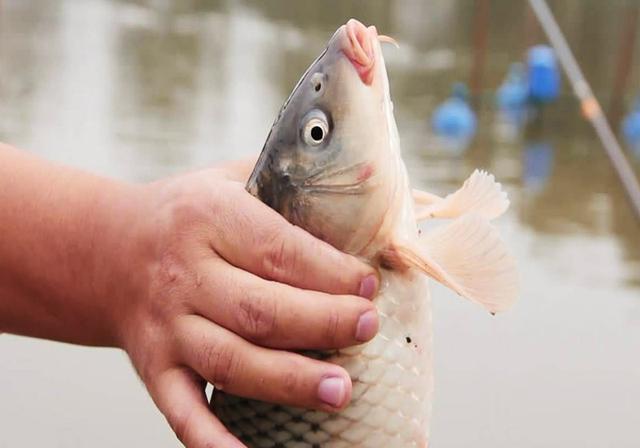 钓鱼不牢记这几点,就是神仙来了也钓不到