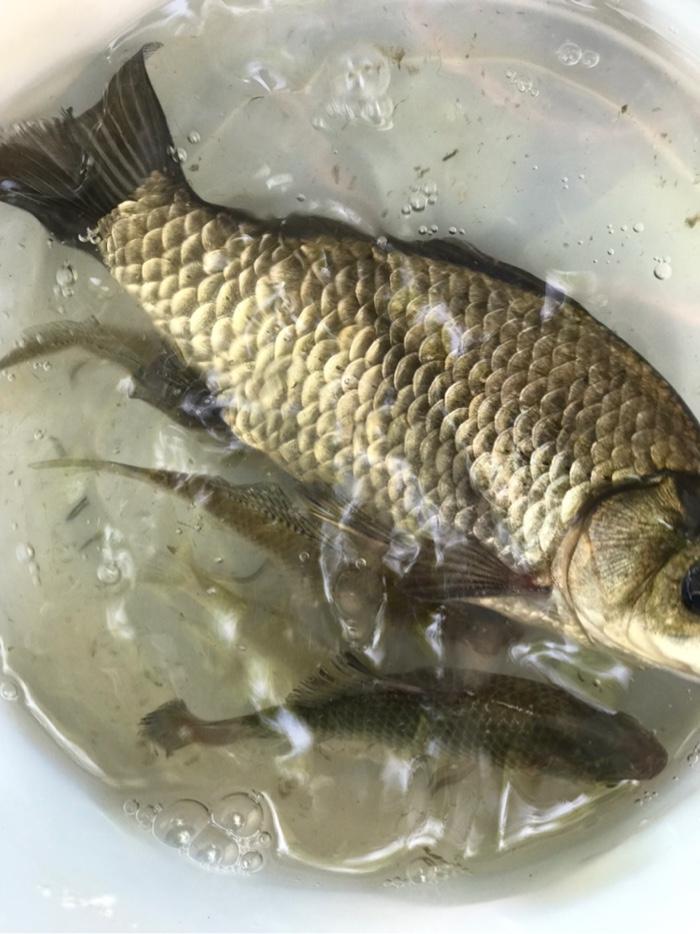终于有鱼获了,没有空军。