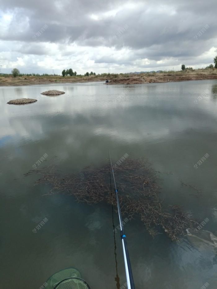 今天远近双修  一只4米8   一只7米2   这块很平  都在两米左右的水深  开了搓饵   开整!