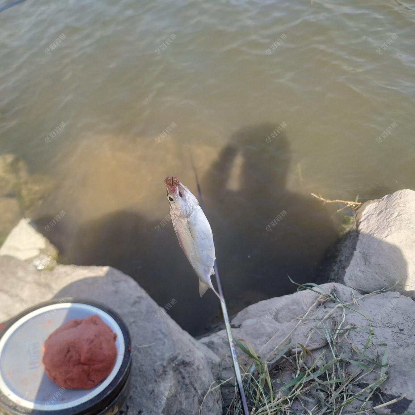 我和田大师他们在一起钓鱼,这是开竿鱼。溪哥一尾!