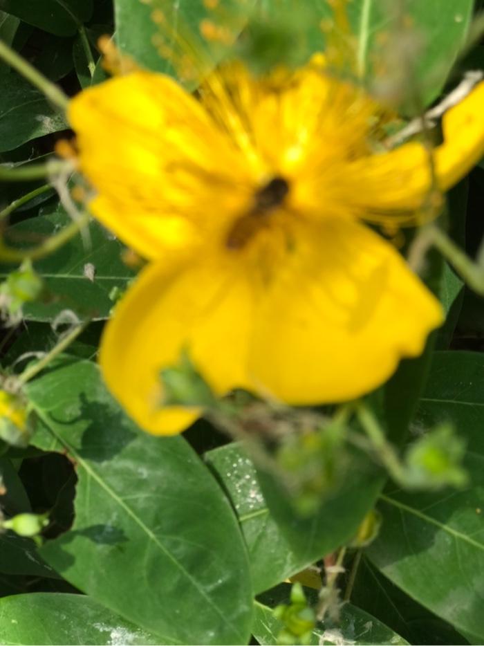 花蕊心里的蜜蜂。