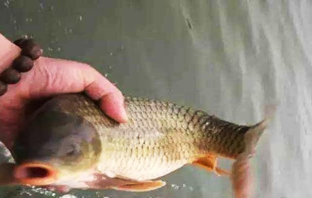水中有鱼不咬钩,诱因很简单,只是不了解而已
