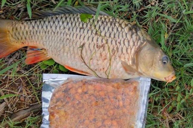 这饵用来对付草鱼鲤鱼,那叫一个狠