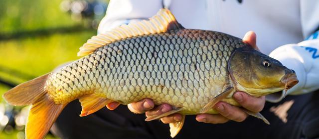 大江大河中如何钓到目标鱼?饵料的味型与钓位是关键