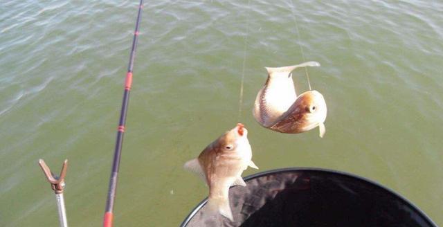 日钓千斤鱼不是不可能,但得满足这些条件