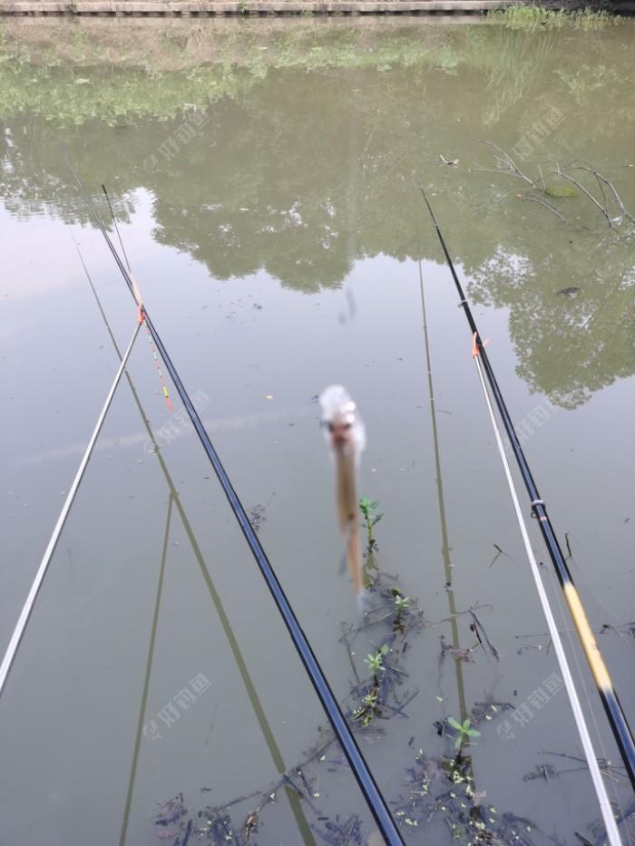 看看擀面杖鱼竿上鱼快呀!