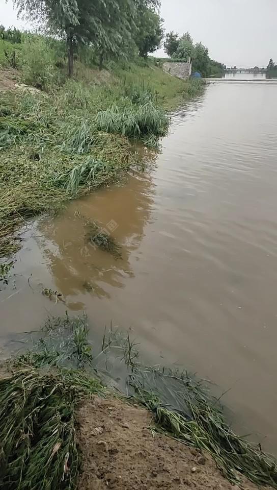 山东昨天又下雨了,毫不吝啬的泼了三个小时水,到处都是浑水,上游也往下泄洪