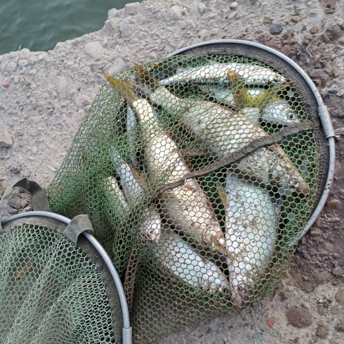 今天鱼获,共九条鱼,比昨天又多了几条。