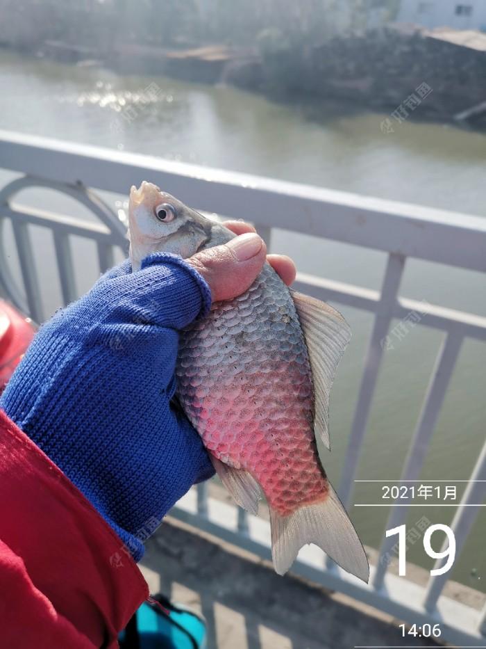 探访新钓点鱼情 天时地利都没有(图10)