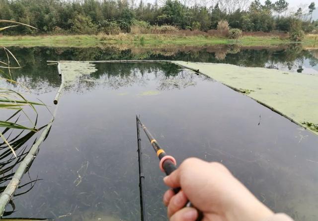 野生的钓鱼变成这样的话钓浮!共享3个钓浮的豆知识(图1)