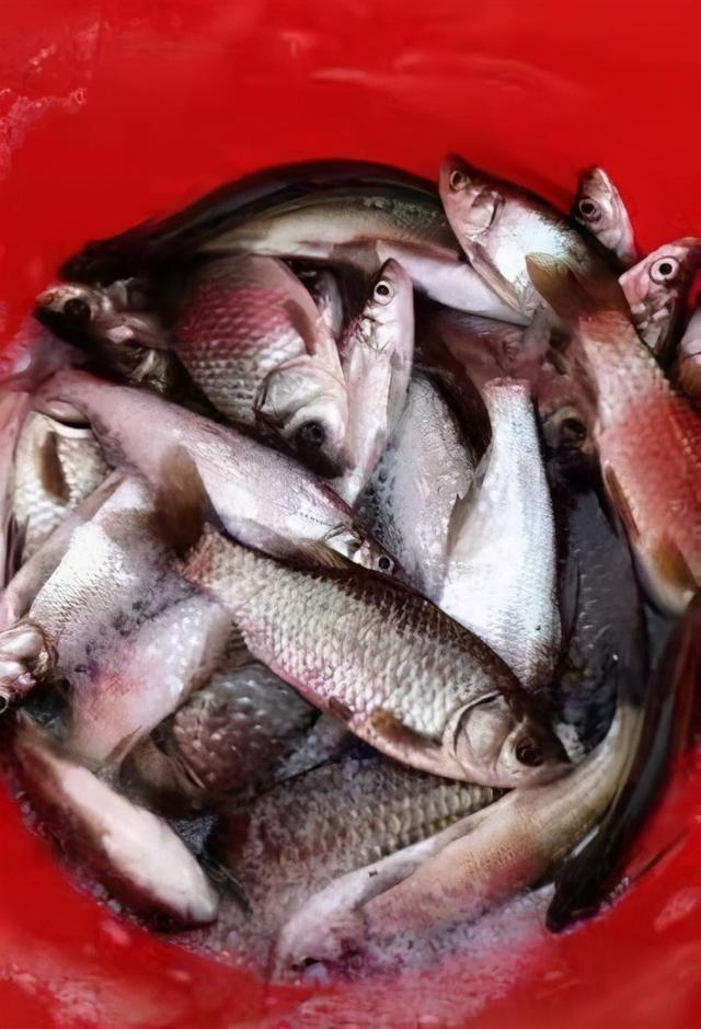 野钓窗口期的常见鱼黄金时段盘点,做好准备真可连竿