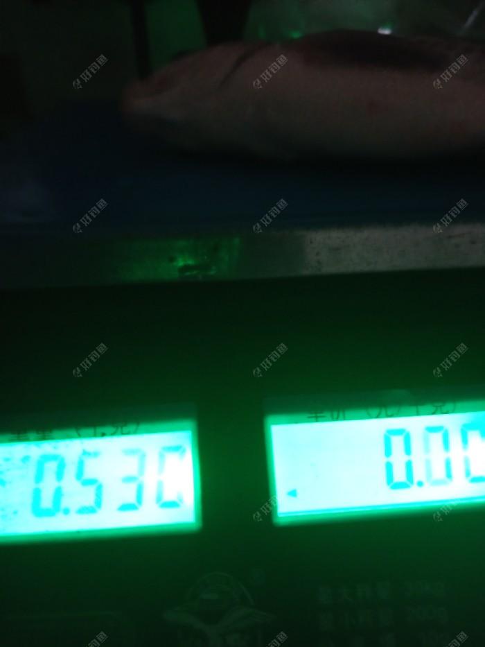 这条收竿鳊鱼已超过一斤。谢谢您的阅帖,祝您牛年快乐,幸福安康,大鲫大鲤,出钓爆护!祝好钓鱼平台牛年兴旺,牛气冲天,紫气东来,越办越好!