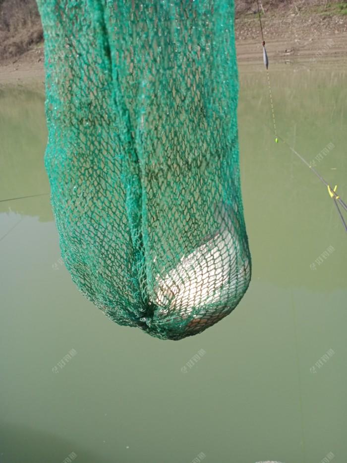 半斤的鲫鱼