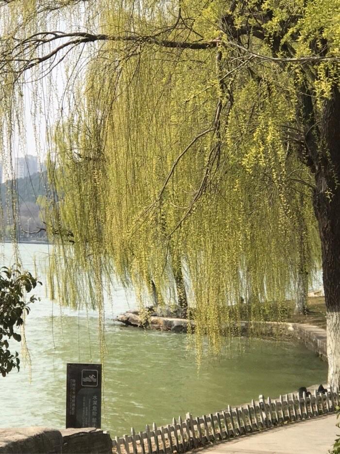 上午去王带河看钓友们钓鱼