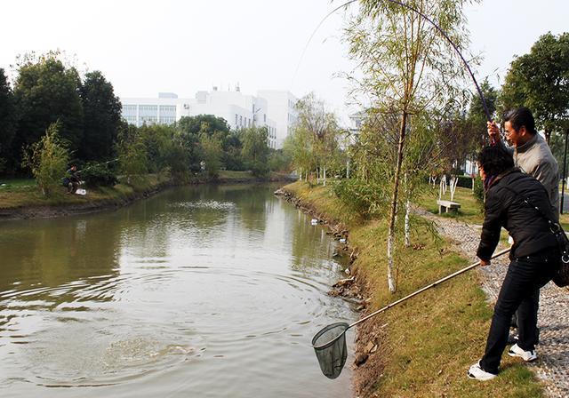 河里没鱼,是钓鱼人钓走了?不好意思这锅我们不背