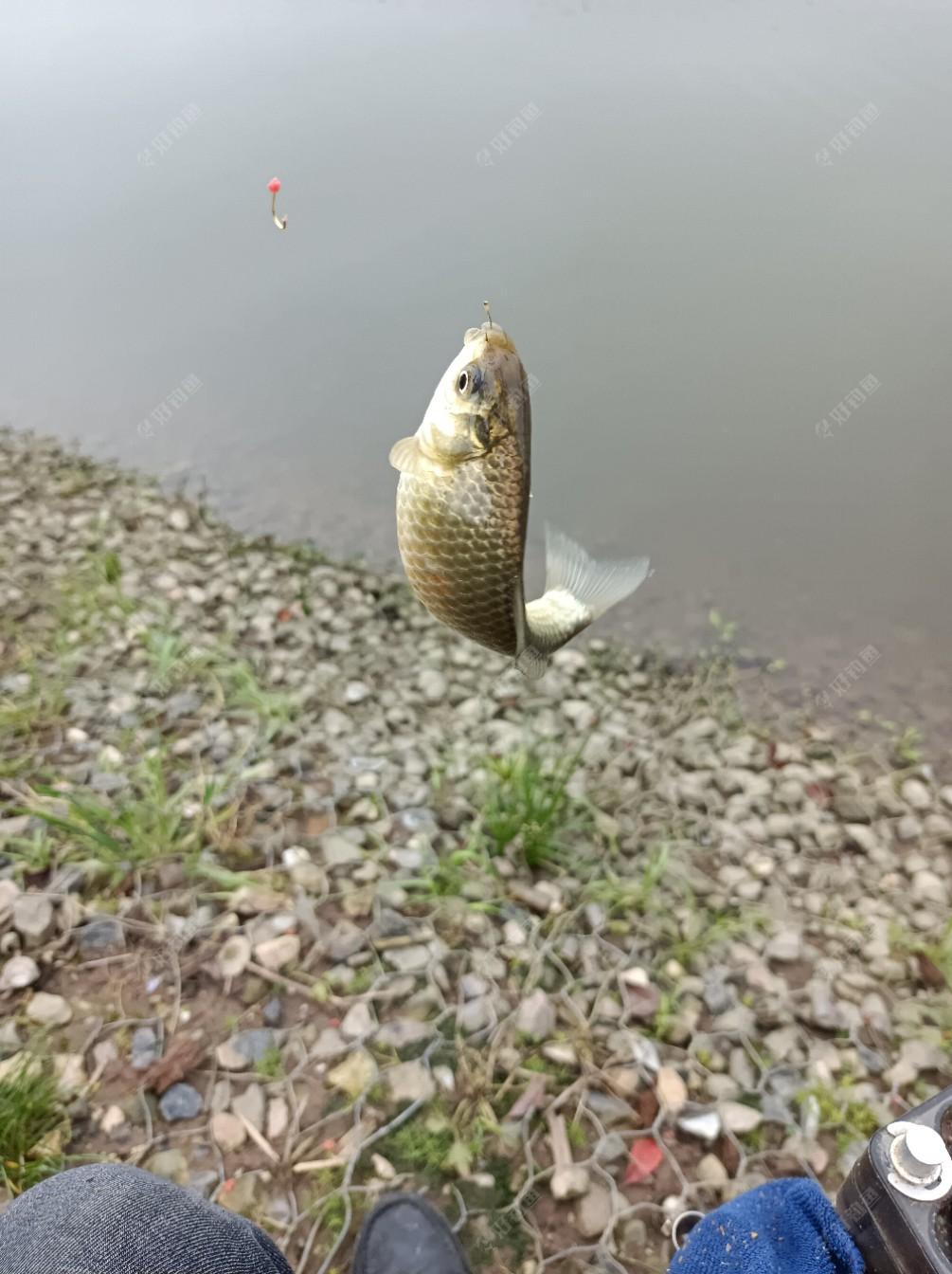 各个鱼层都有鱼