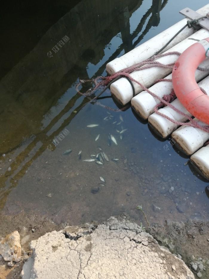 5.30手东西回家准备出发。储物箱里的鱼死了一大半。全是在下游的乌头仔。有点可惜。不过河里有鲶鱼黑鱼。也算死过做出了一点奉献。