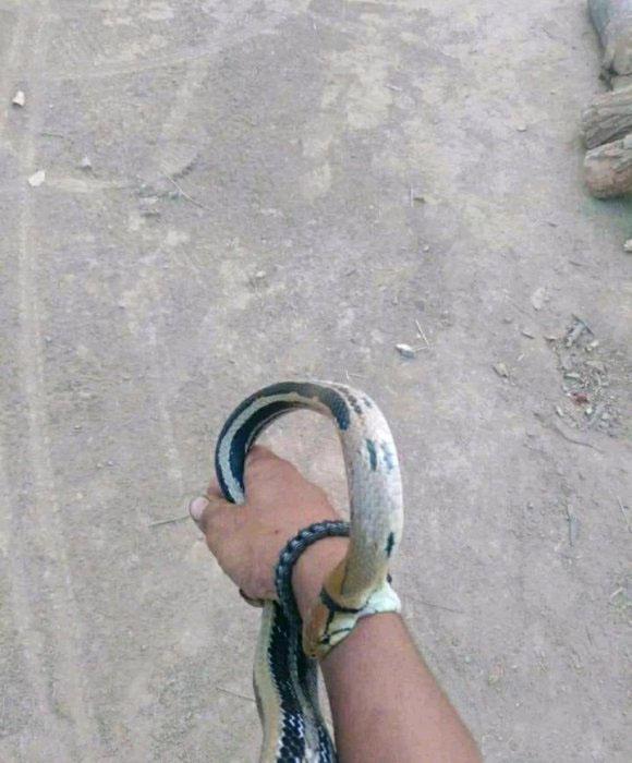 野外钓鱼常遇到蛇,有什么方法避免呢(图1)