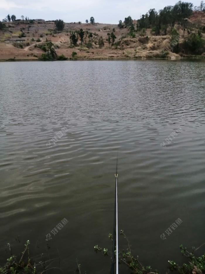 我的钓点,4.5米竿,水深2.7米左右。