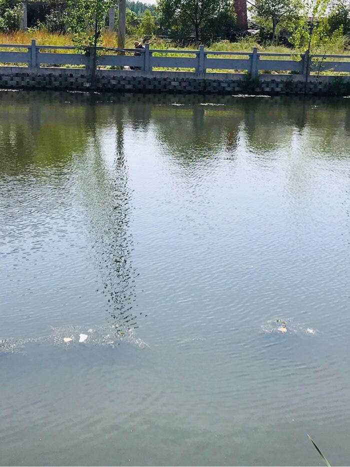 河水非常清澈透明,水质非常好。一位老者坐在对岸正在整理鱼具,他一人用两根鱼竿,但是今天没有收获。