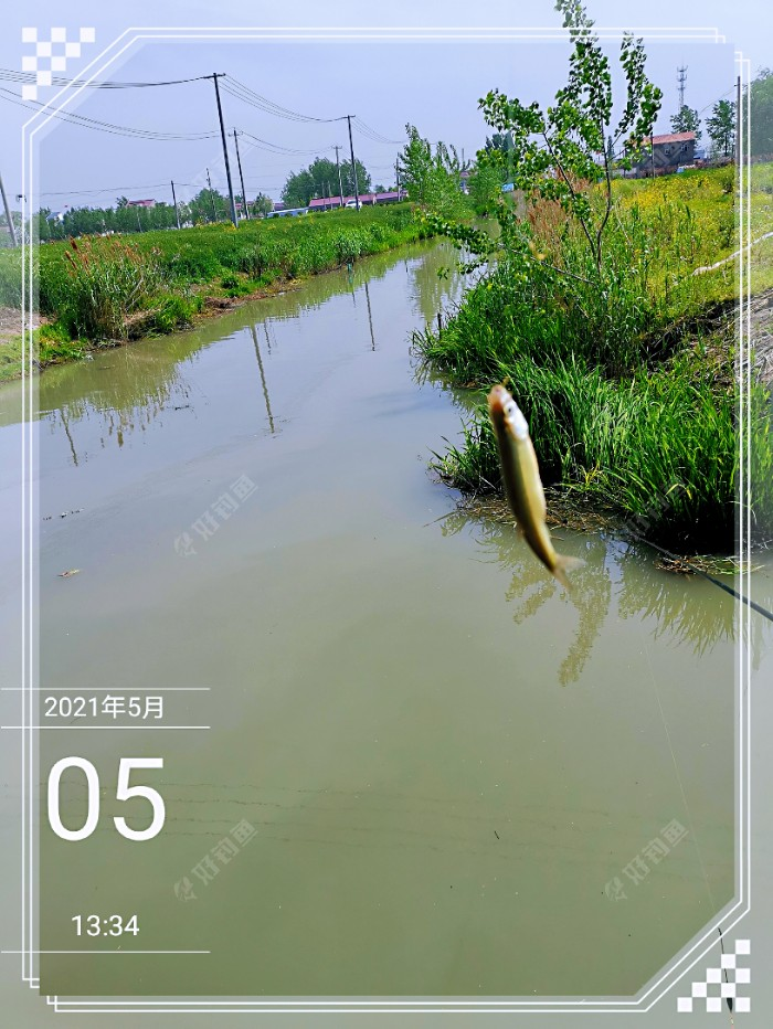 水不在清有鱼则灵!