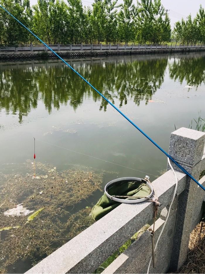 水草前面的钓点,昨天在该处钓了二斤多鱼,今天却寥寥无几。