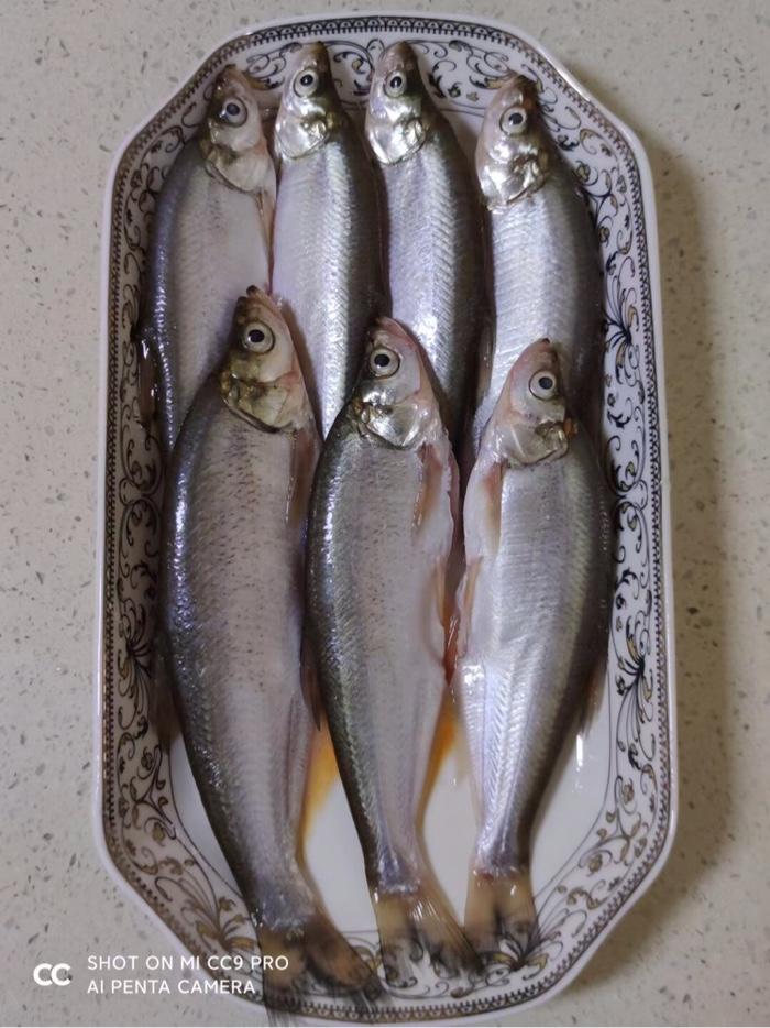 新鲜靓丽的鱼获使人垂涎三尺🤤这开春的鲜鱼味道无比!让我们共同享受这大自然馈赠的美味吧!