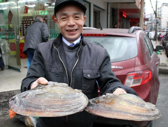聪明的鳑鲏鱼!想让河蚌免费养孩子,却被钩介幼虫寄生