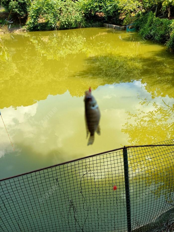不出意外,看竿就是小罗飞,比昨天污水公园的罗飞看起来顺眼,昨天夜钓哪里竟然是佛山最贵的楼盘,因为那污水??