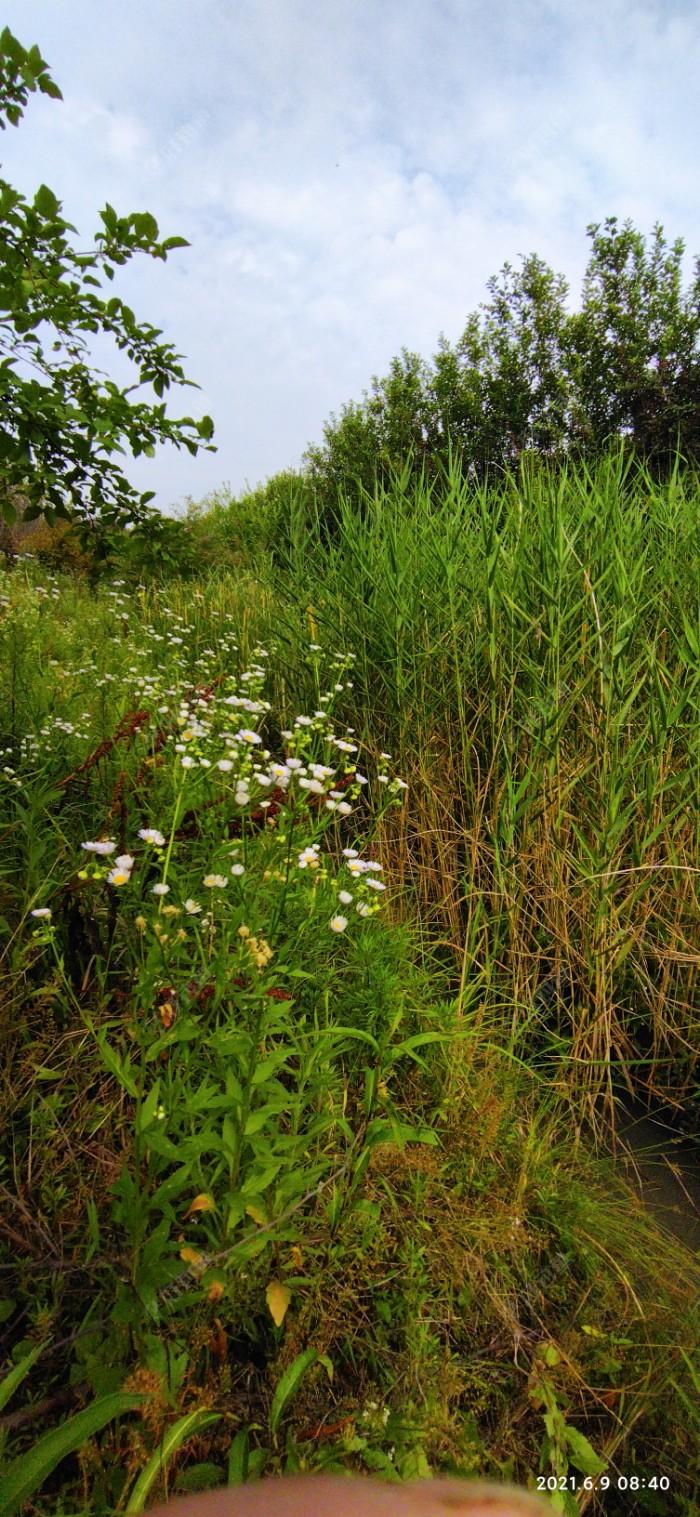 水沟基本都这个状态,人下不去水都被草长满了。