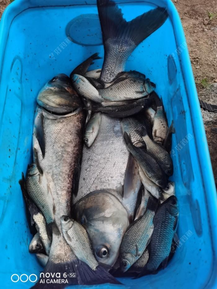 鱼获14斤多