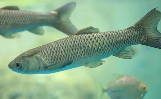 """夏季守巨物的3个要素,""""诱鱼、留鱼、钓鱼"""",缺一不可"""