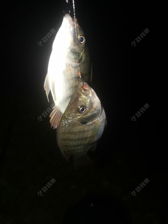 09:30,两侧的朋友都陆陆续续上鲤鱼鲮鱼,当然指甲非还是闹,就我这里定海神针,有点纳闷了,莫非是因为我杆子比他们短?触底,离底,半水,钓浮效果都不行。