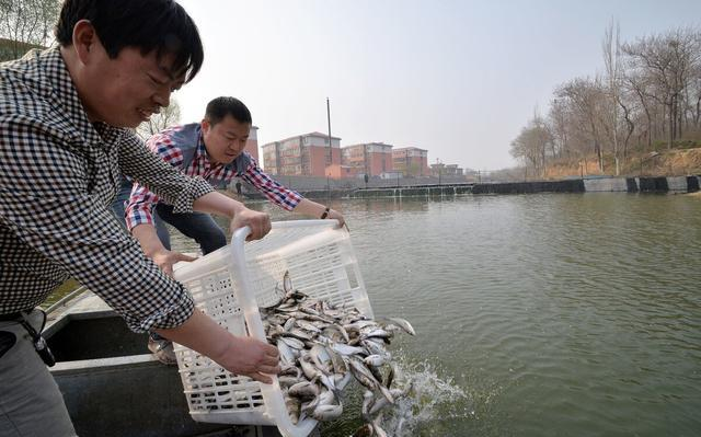 增殖放流活动结束后,实际成效并不明显!野外水域放生或明令禁止
