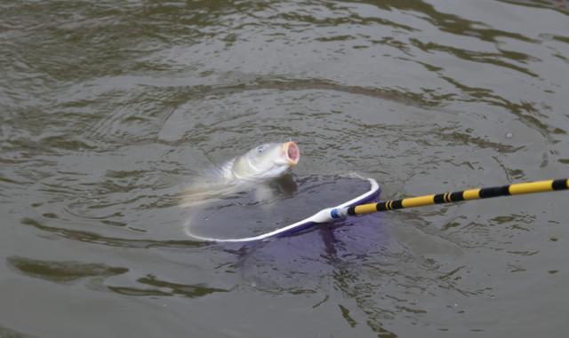 别再被商家忽悠了,鱼钩重量、粗细并不影响上鱼率