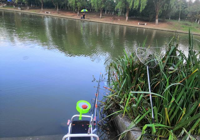 钓鱼吃瘪:绝佳的位置,暴躁的鱼口,我却很无奈