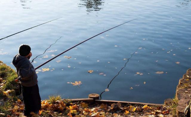 立秋之后,温度下降,四个技巧准确把握鱼情(图4)