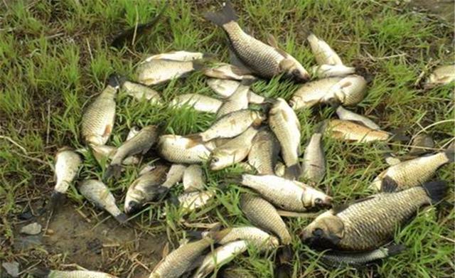 有的鱼没有胃,所以很能吃,自然更容易被钓到(图2)
