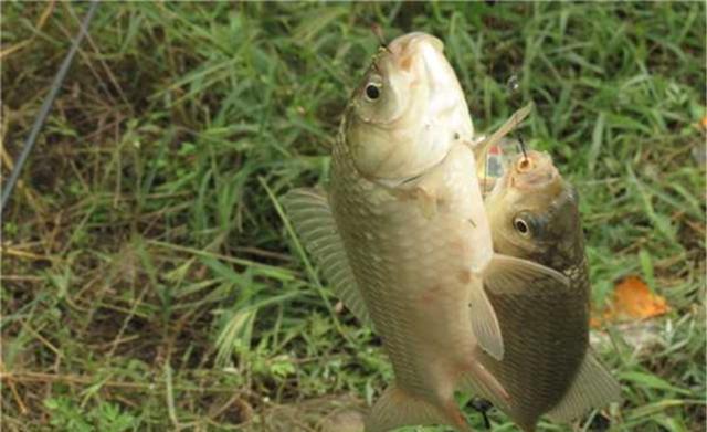 窝点鱼星泛滥,就是不咬钩,是什么原因(图2)
