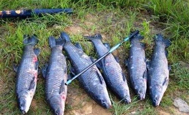 仲秋博大鱼,用这些遛鱼招数,一定不跑鱼