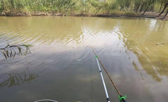 秋分前后钓鲫鱼,在这些位置下竿(图5)