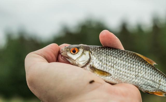 重庆钓鱼《办法》试行:9种方式禁止使用,不要再违法钓鱼