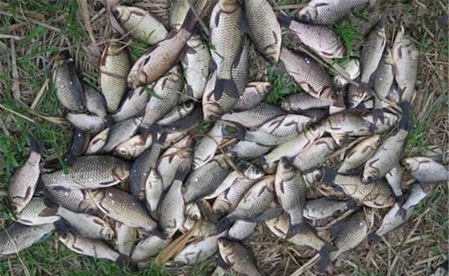深秋钓鱼,钓法要跟着节气走,注意这些变化规律
