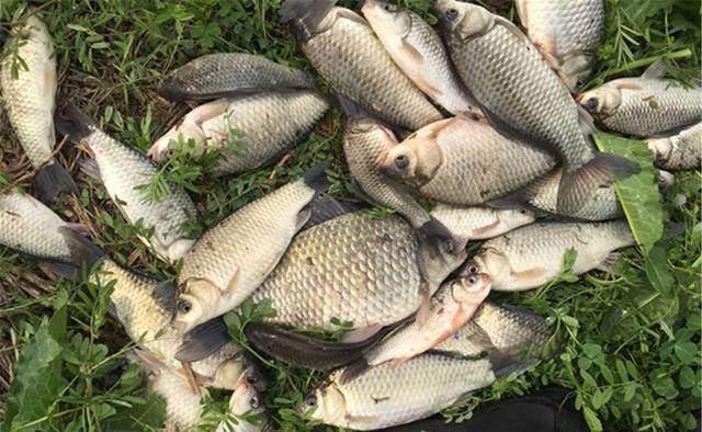 晚秋气温变低鱼情变差,有这5不钓,渔获才有保证