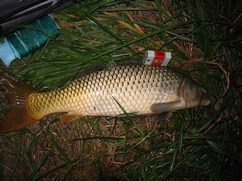 避小鱼,原生态--夏季用饵思路多